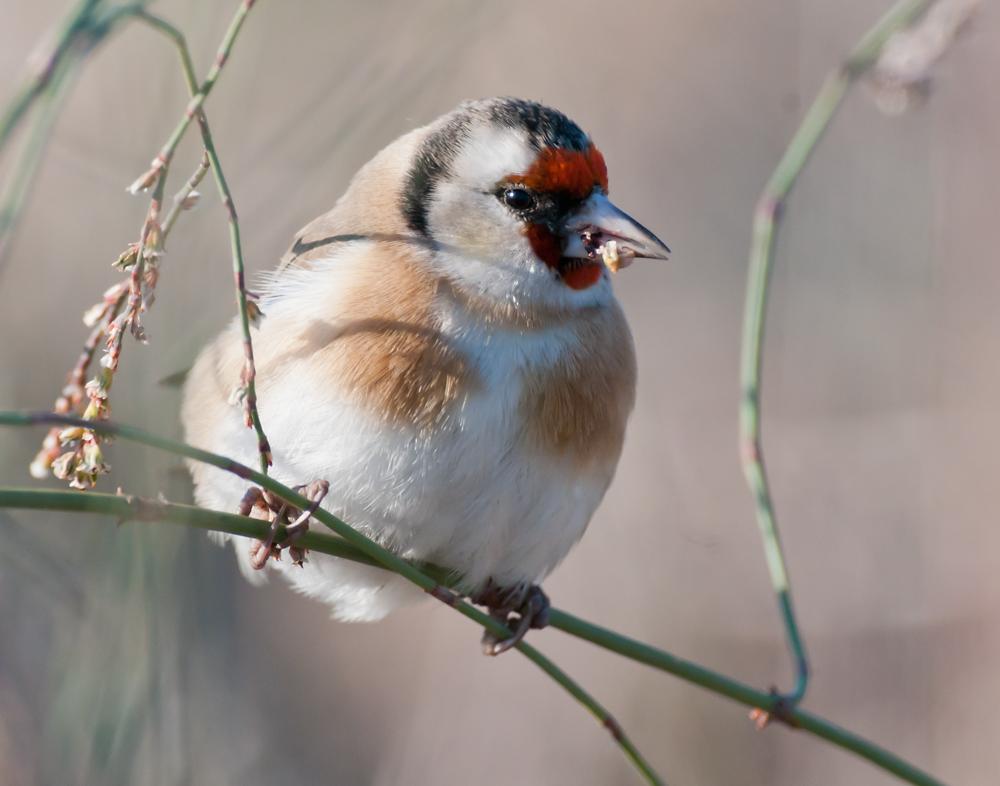 Orangensommer in Kilikien - Birdlife